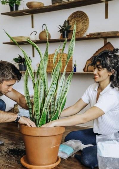Consultor de planta