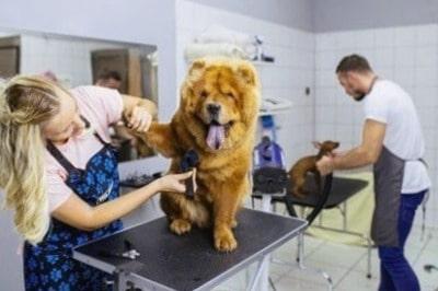 Servicios-de-cuidado-de-mascotas-y-paseo-de-perros